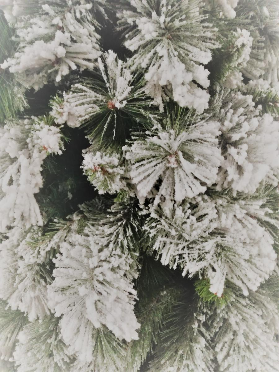 Foto Alberi Di Natale Bianchi acquista albero di natale mod. lapponia innevato cm.180h